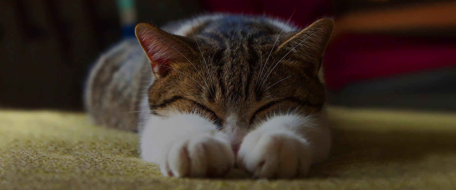 Pet day care | Pet sitting | Cat hotel | Cat sitting | Cat